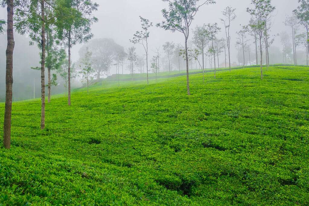Coonoor_Hill_Station_near_Ooty