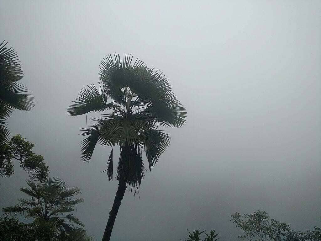 Arwah cave Flora in the Fog