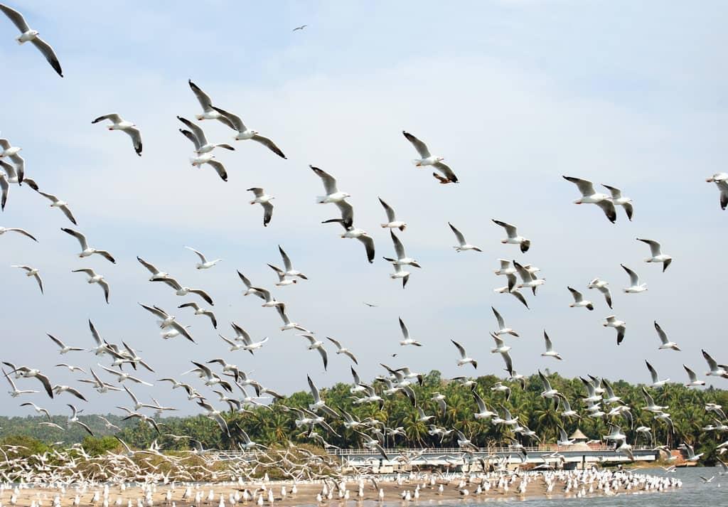 Kadalundi Birdn Sanctuary