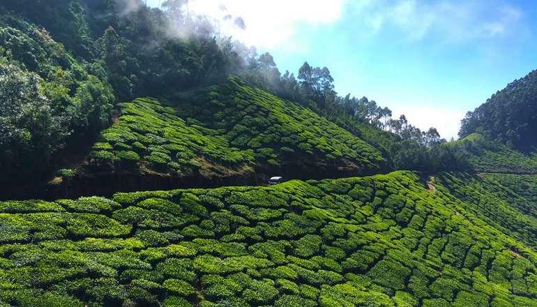 Kolukkumalai Tea Estate