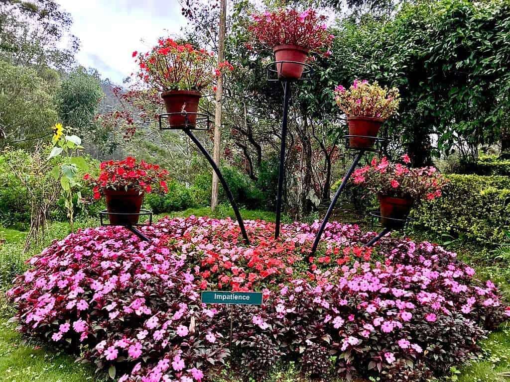 Munnar_Rose_Garden