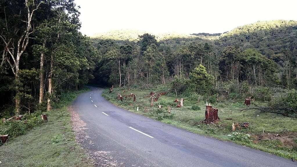 Pampadum_Shola_National_Park,_Munnar