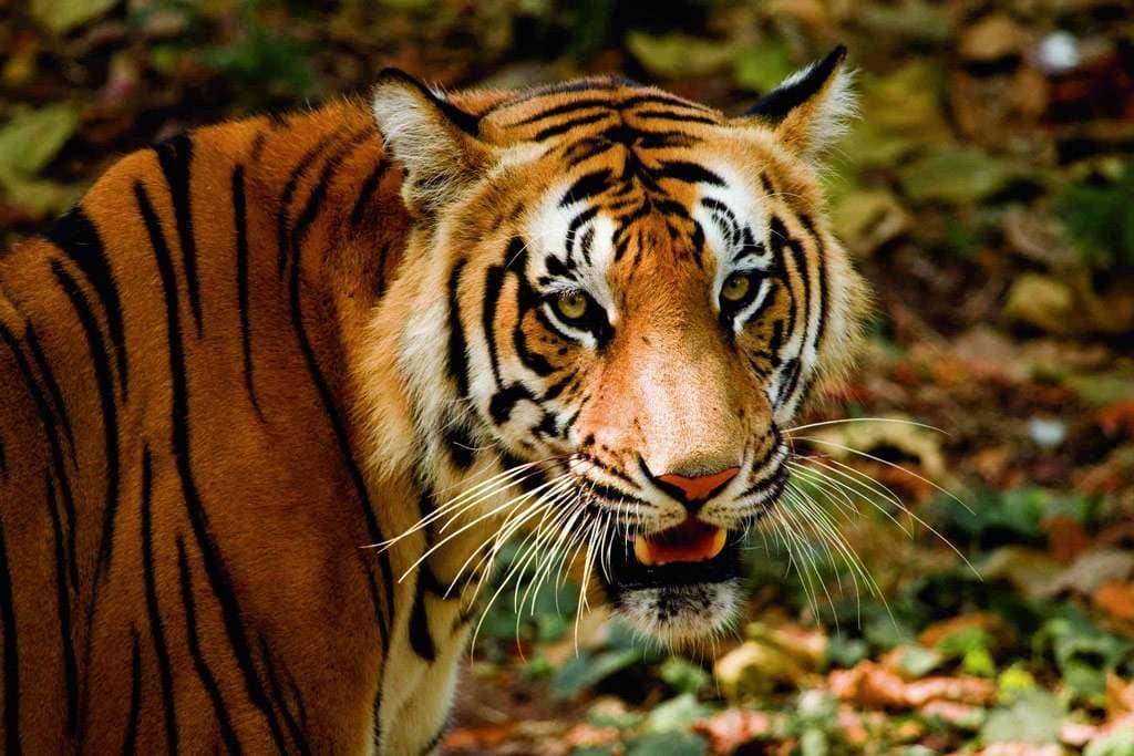 thiruvananthapuram zoo kerala